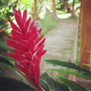 Flowers on the path at the Doka Estate Coffee Plantation