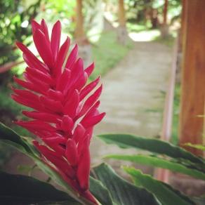 Flowers on the path at the Doka Estate Coffee Plantation