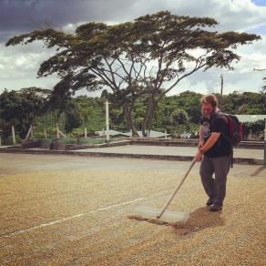 John rakes the beans at Doka Estate Coffee Plantation
