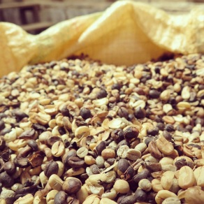 Beans ready to be roasted at Doka Estate Coffee Plantation
