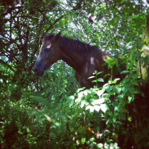 Wild horse on the trail to Volcan Arenal