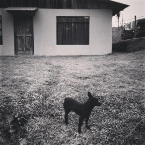 Little dog, little house