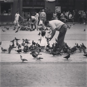 Pigeon wars in San Jose