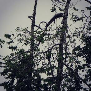 Is it a bird? Is it a plane? Nope, it's an iguana