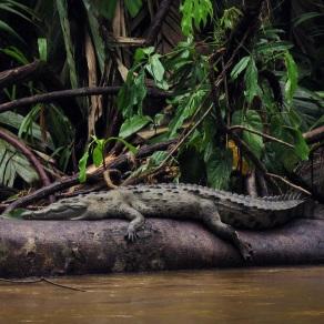 Holy Crocodile!