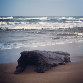 Driftwood on Tortuguero beach
