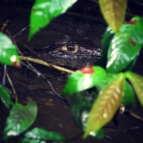 I see you, whispered the Caiman