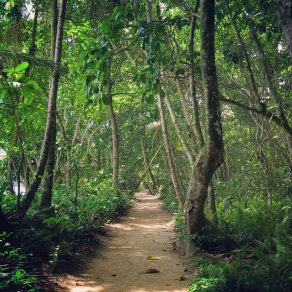 Cahuita National Reserve