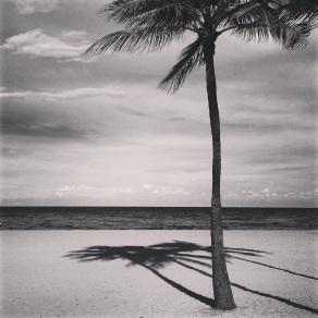 Palm and Shadow, Hollywood Beach