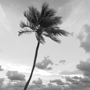 Moon and Palm, Hollywood Beach