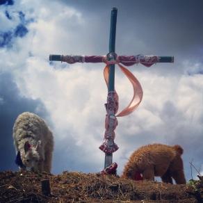 Llamas and Cross