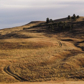 Custer State Park, SD
