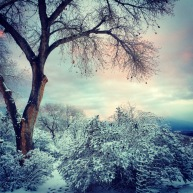 New Mexico snow