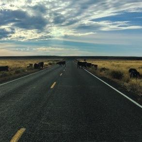 Cattle Road, AZ