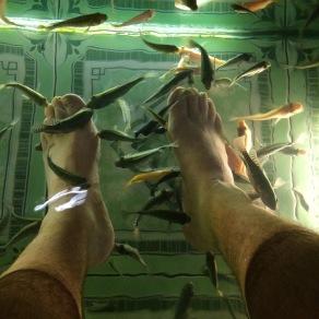 Fish massage!